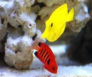 morske centrum - specialista na morske akvaria